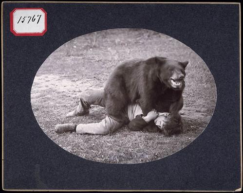 Wrestling with a trained bear / Lutte avec un ours dressé