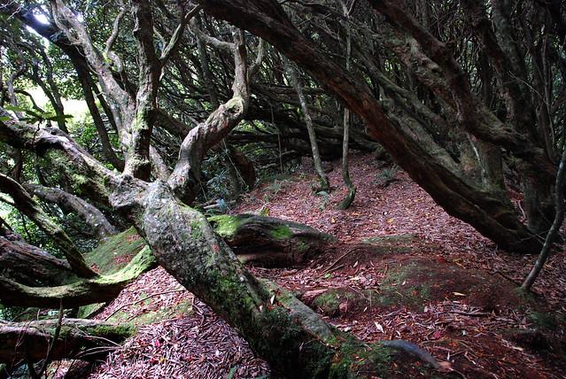 漂亮的杜鵑林