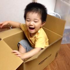 Amazon箱に入るとらちゃん (2012/7/29)