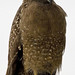 Crested Serpent Eagle (Colin Brown)