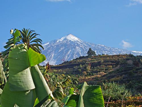 Mount Teide from Icod de los Vinos, Tenerife
