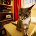 Petit chat au très grand angle by gnomovtt