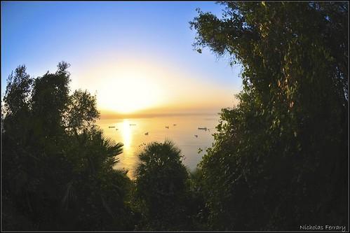 trees sunset sky sun nature sunrise nikon wildlife gibraltar d300s nikond300s nicholasferrary