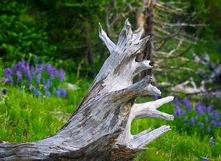 Old Wood with Wildflowers