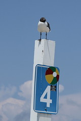 Sea Gull on North Wildwood Beach Pole