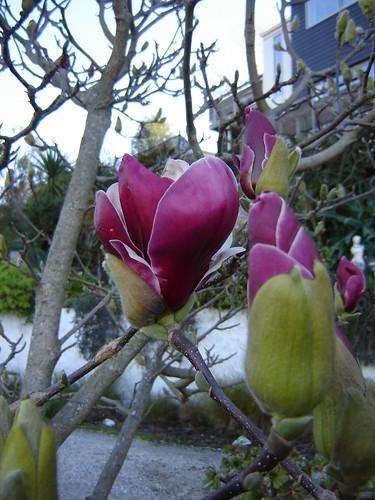 Almost Spring Garden 2
