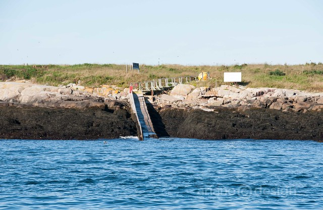 Machias Seal Island with Sea Watch Tours