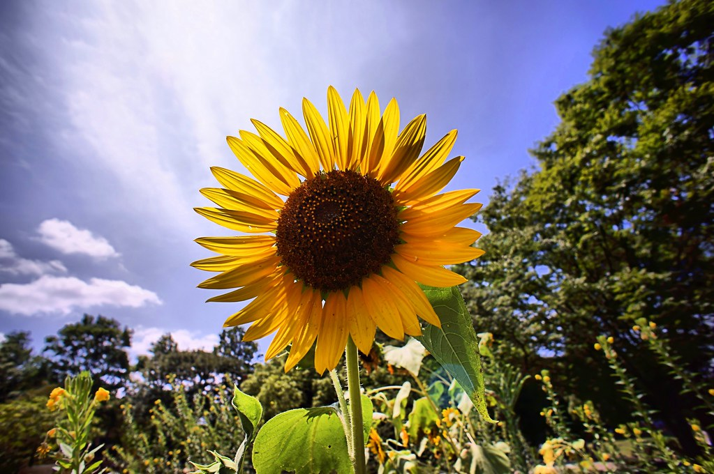 summer flower - 夏の花