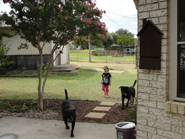2012 Helen and Dogs