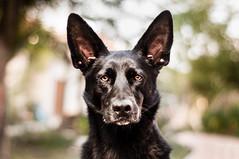 [フリー画像素材] 動物 1, 犬・イヌ ID:201208181000