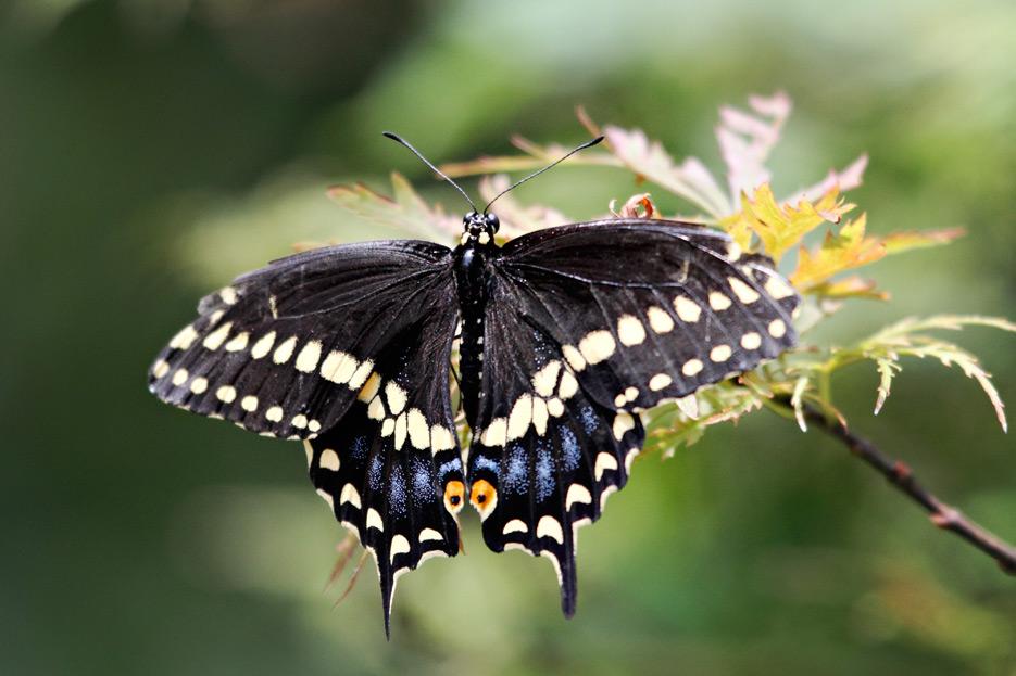072612_08_butterfly06