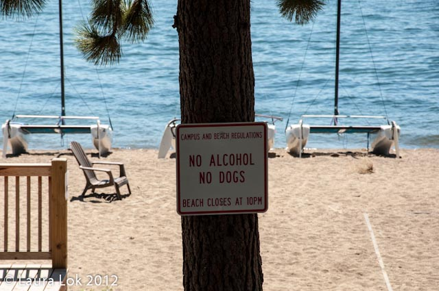 no drinking unless you have dogs