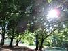 i grandi alberi del parco vecchio