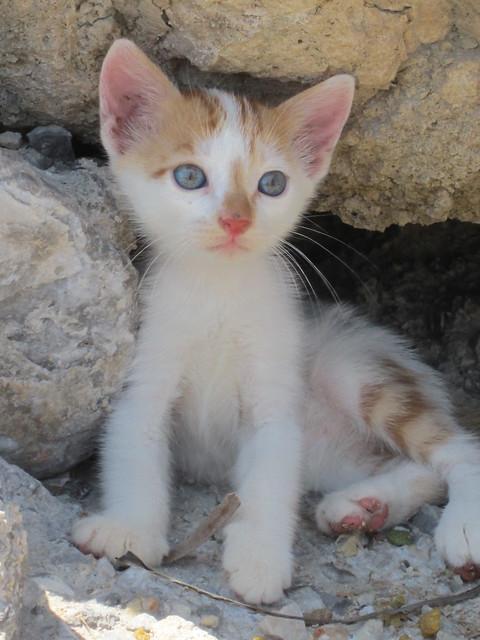 Greece 2012 034