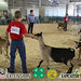 Dairy/Pygmy Goat