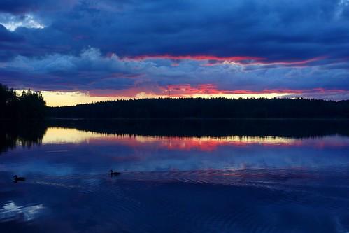 ducks sakarip wildducks lake evening water reflection sky clouds sunset scenery landscape lakescape skyscape cloudscape finland luumäki kokonkylä pahainlahti july summer birds