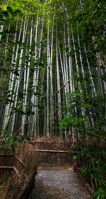 Path inside a Bamboo forest in Kyoto
