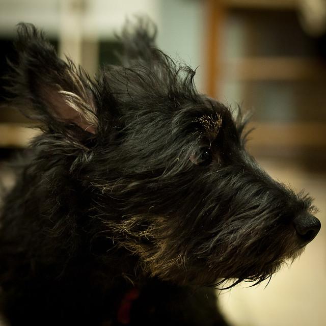 Fergus Profile