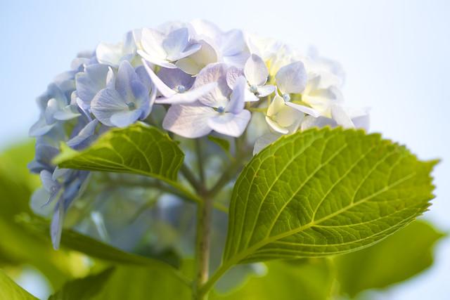色とりどりの一つの花