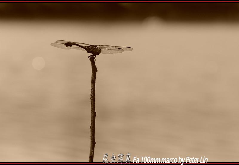 昆蟲寫真 2012 / 07