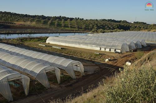 Agricultura (invernaderos)