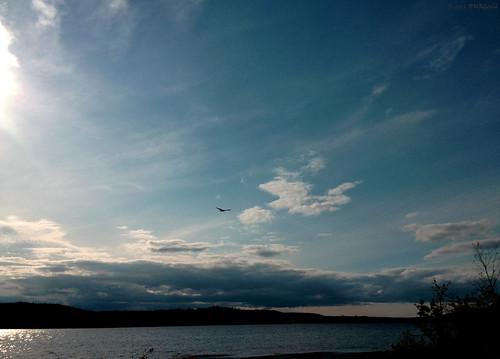 sky canada landscape novascotia eagle lakecharlotte