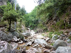 Remontée de la Frassiccia : après la redescente du col, vue du ruisseau vers l'amont