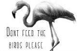 dontfeedthebirds