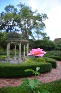 Furman Rose Garden