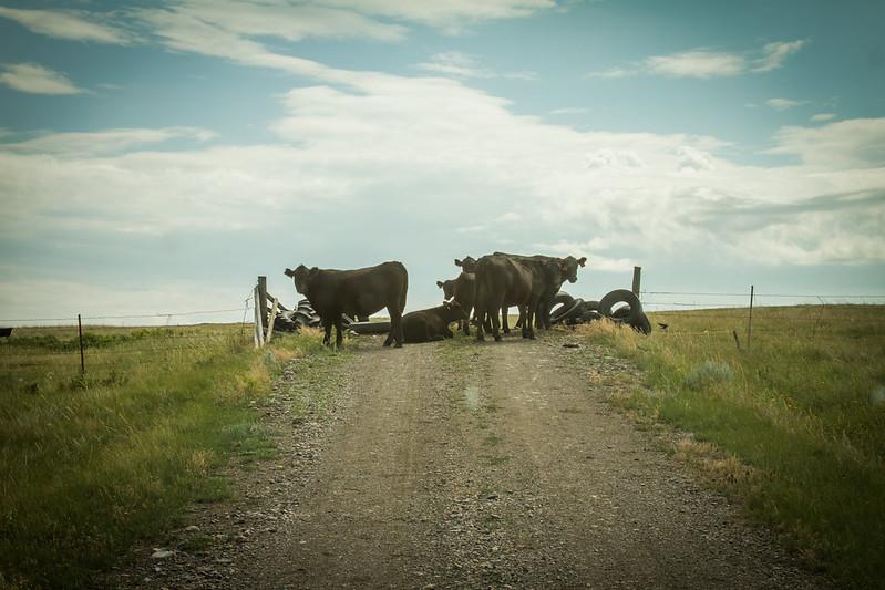 Montana Trip, July 2012