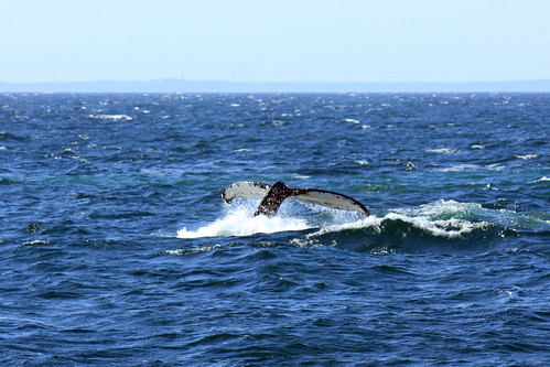 20120722_Boston_Whale_Watching_012