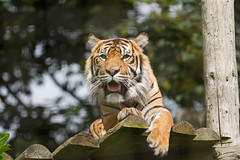 Chester Zoo-6499