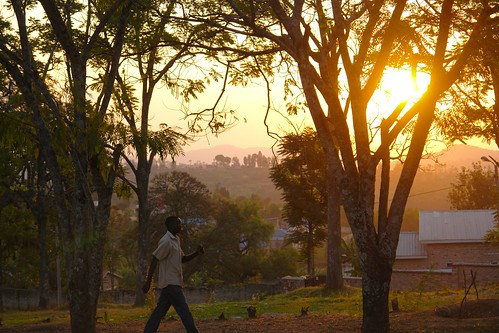 africa travel plant tree nature dusk rwanda daytime nyanza 08project 09locationgeotag 03content 02characteristics 04context 17unhasudunhabitat