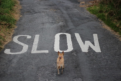 Slow down... by melgaardian