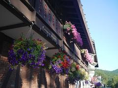 Flowers in Leavenworth