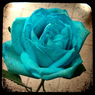 a blue rose for my blue heart