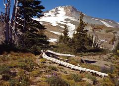 Mt. Hood Oregon