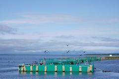 A mooring on the Notsuke Peninsula (Hokkaido, Japan)