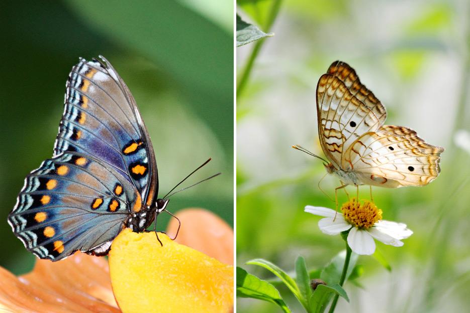 072612_08_butterfly02