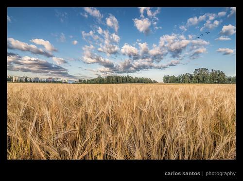 trees birds finland helsinki natural farm cereal fields viikki vertorama canon5dmarkiii 00560helsinki