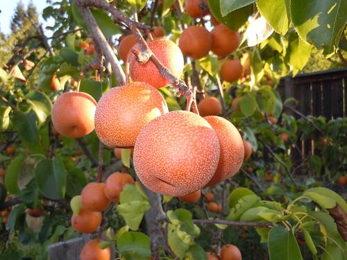 fruit 016