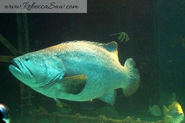 Singora Tram Tour - songkhla aquarium thailand-012