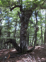 Fervenza de Tabayón (Tarna, Asturias)