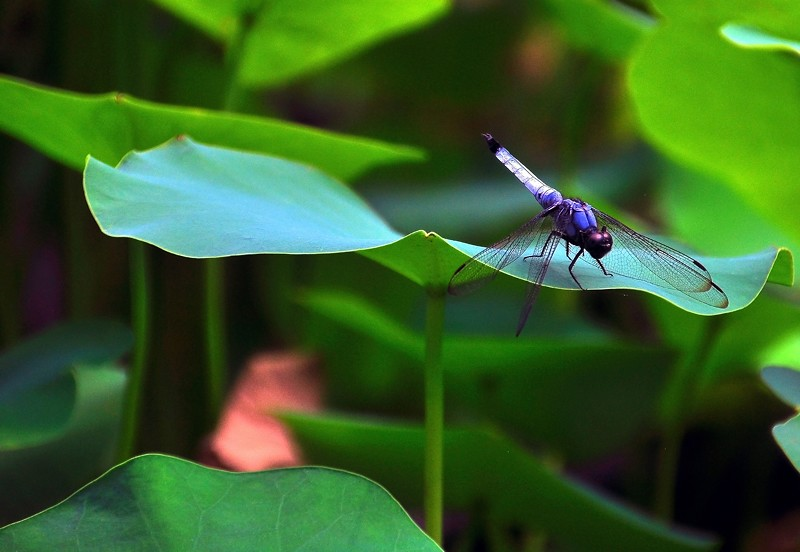 Dragon Fly, Bongwonsa Temple -- Seoul