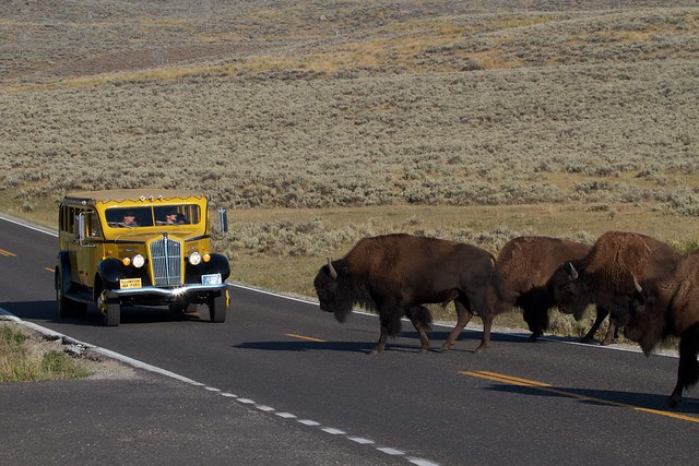 Lamar Valley, and Yellowstone vintage tour bus