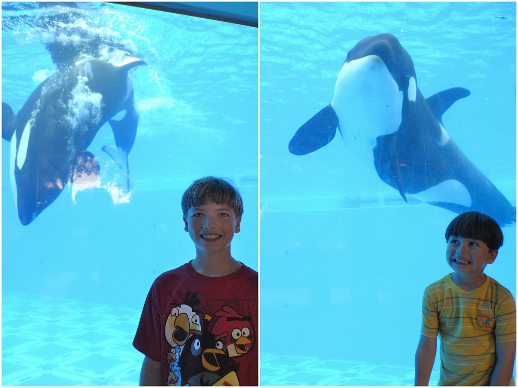 JpegSeaWorld09