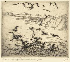 Gulls near sunken ledges