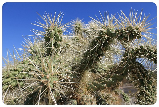 cactus needles arizona
