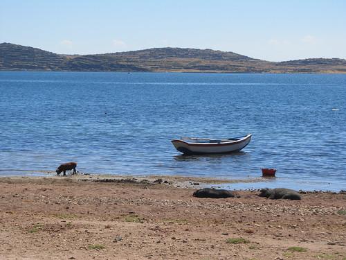 Lac Titicaca: l'Isla del Sol et ses cochons