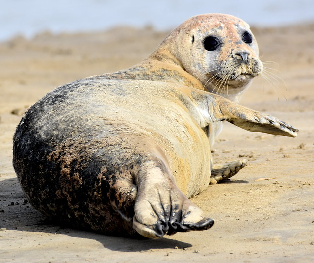 Seal on the shore.